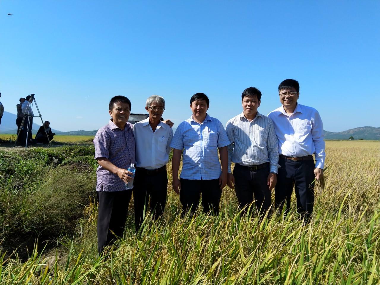 Hội thảo mô hình sản xuất giống lúa xác nhận cấp 1 cho hai giống lúa mới OM9915 và OM9921