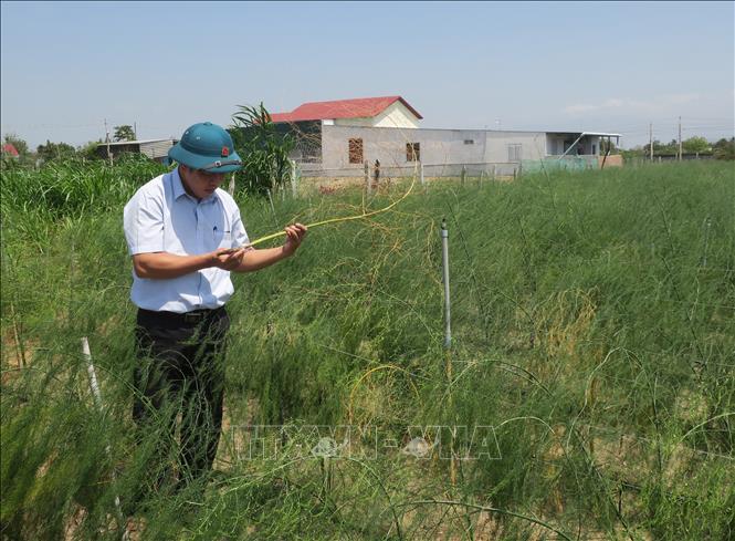 Ngày khoa học và công nghệ Việt Nam 18/5: Viện nghiên cứu Bông và PTNN Nha Hố - nơi khởi nguồn những giống cây trồng mới.