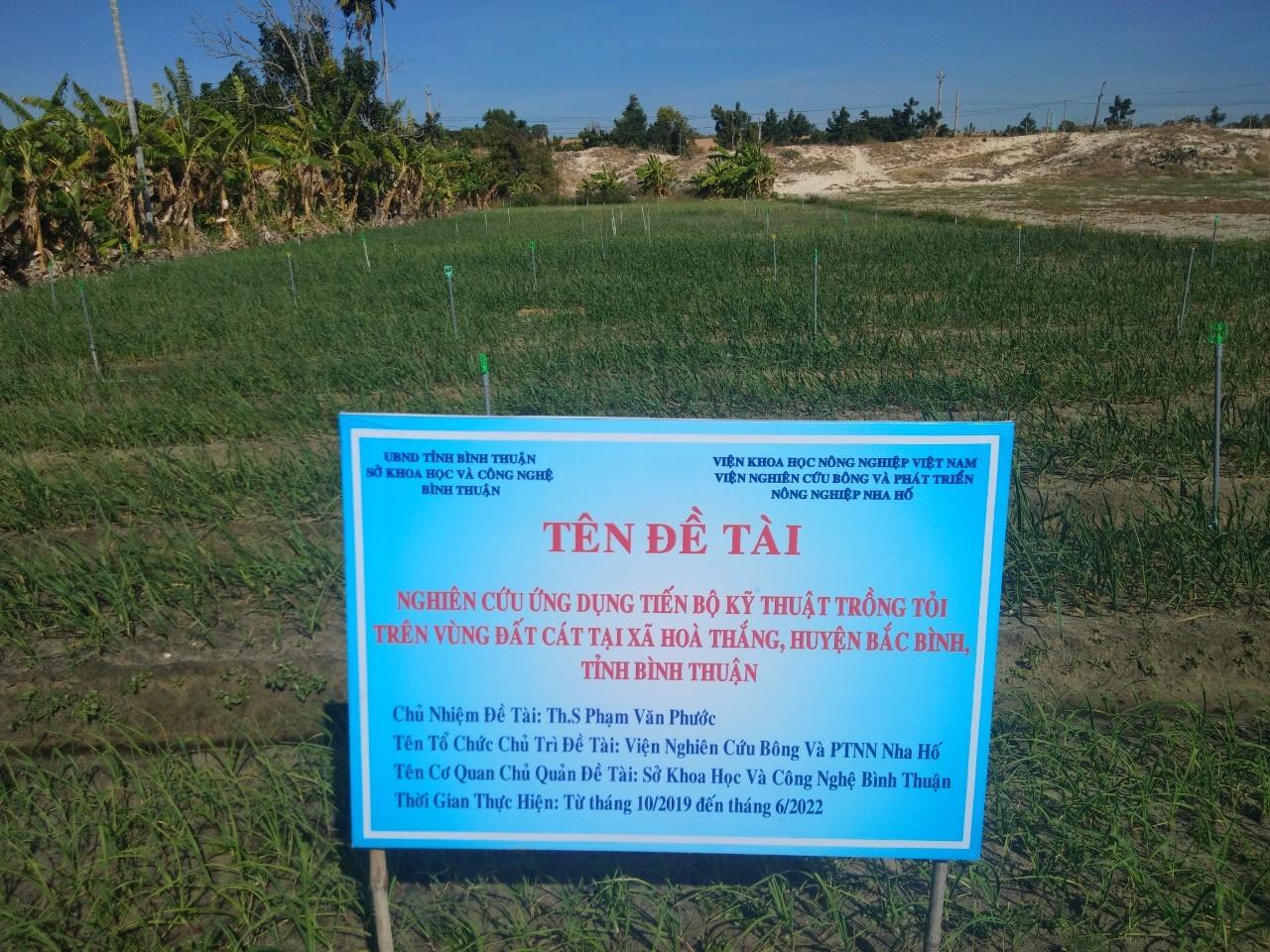 """Kiểm tra tiến độ đề tài: """"Nghiên cứu ứng dụng tiến bộ kỹ thuật trồng tỏi trên vùng đất cát tại xã Hòa Thắng, huyện Bắc Bình, tỉnh Bình Thuận"""" đợt 1 năm 2020"""