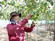 Viện Nghiên cứu Bông và Phát triển nông nghiệp Nha Hố: Tập trung nghiên cứu, ứng dụng khoa học - công nghệ trong sản xuất nông nghiệp