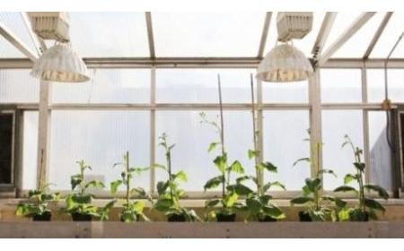 Khắc phục hạn chế quang hợp làm tăng 40% năng suất cây trồng
