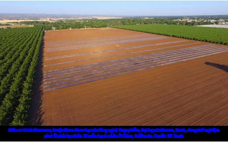 Sử dụng ánh nắng mặt trời và chất thải nông nghiệp để phòng trừ dịch hại cây trồng