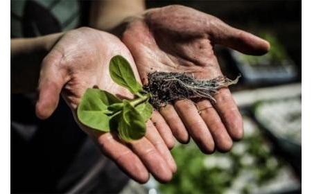 Giải pháp cải thiện hiệu năng quang hợp, tăng 40% năng suất cây trồng