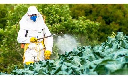 Phát hiện phương pháp thay thế tự nhiên và bền vững cho thuốc trừ sâu hóa học nhân tạo