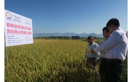 Tánh Linh Hội thảo mô hình sản xuất giống lúa cấp xác nhận 1 cho 2 giống lúa mới OM 9915 và OM 9921