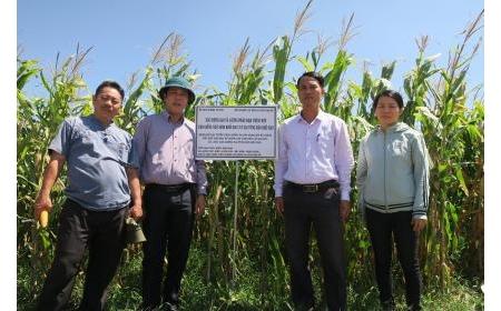Kiểm tra tiến độ thực hiện các nội dung khoa học công nghệ triển khai tại tỉnh Bình Thuận trong vụ Xuân Hè 2020