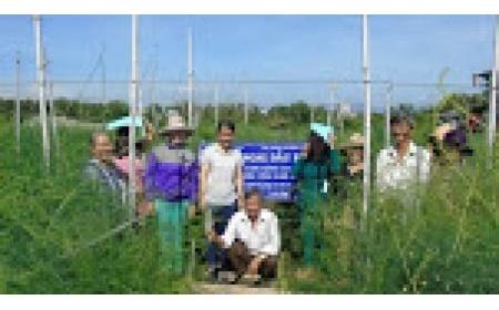 Tập huấn kỹ thuật thâm canh măng tây theo công nghệ cao