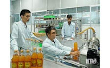 Triển vọng mới trong việc trồng nho rượu tại Ninh Thuận