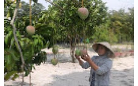 Biến bất lợi thành lợi thế vùng Nam Trung Bộ: Hướng đi phù hợp