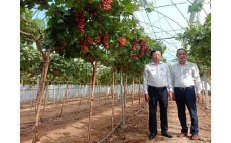 Lãnh đạo UBND tỉnh Ninh Thuận đến thăm và làm việc với Viện